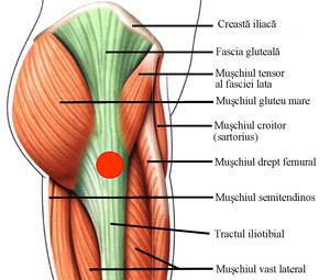tratamentul bolii articulare toracice cervicale gel de articulații indovazine