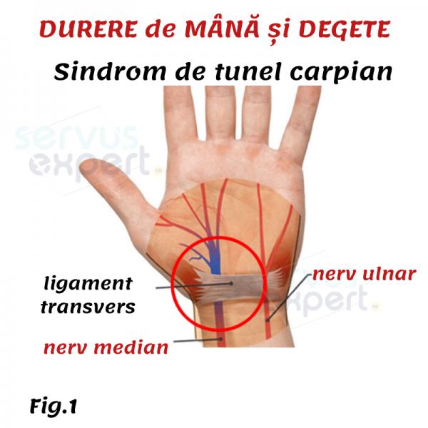 vederea și degetele
