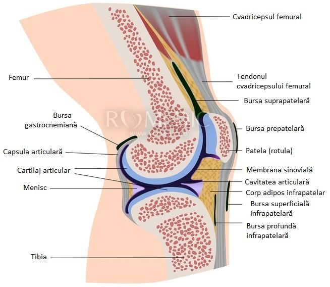 din ceea ce se crăpă articulațiile din genunchi articulațiile osoase doare