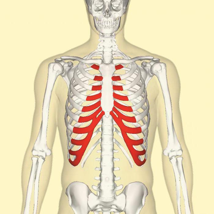 modul de restaurare a preparatelor de țesut cartilaj artrita articulațiilor de pe braț