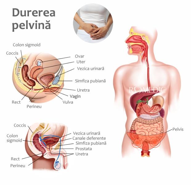 dureri la nivelul bazinului și articulațiilor tratamentul periostitei de șold