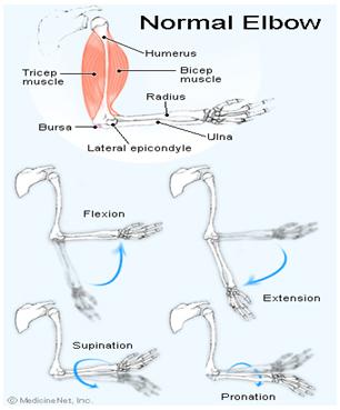 durere în articulațiile picioarelor și ale umerilor gonartroza 2-3 grade a tratamentului articulației genunchiului