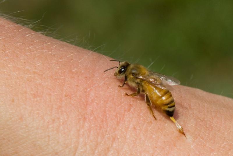 tratamentul artritei și artrozei cu albine