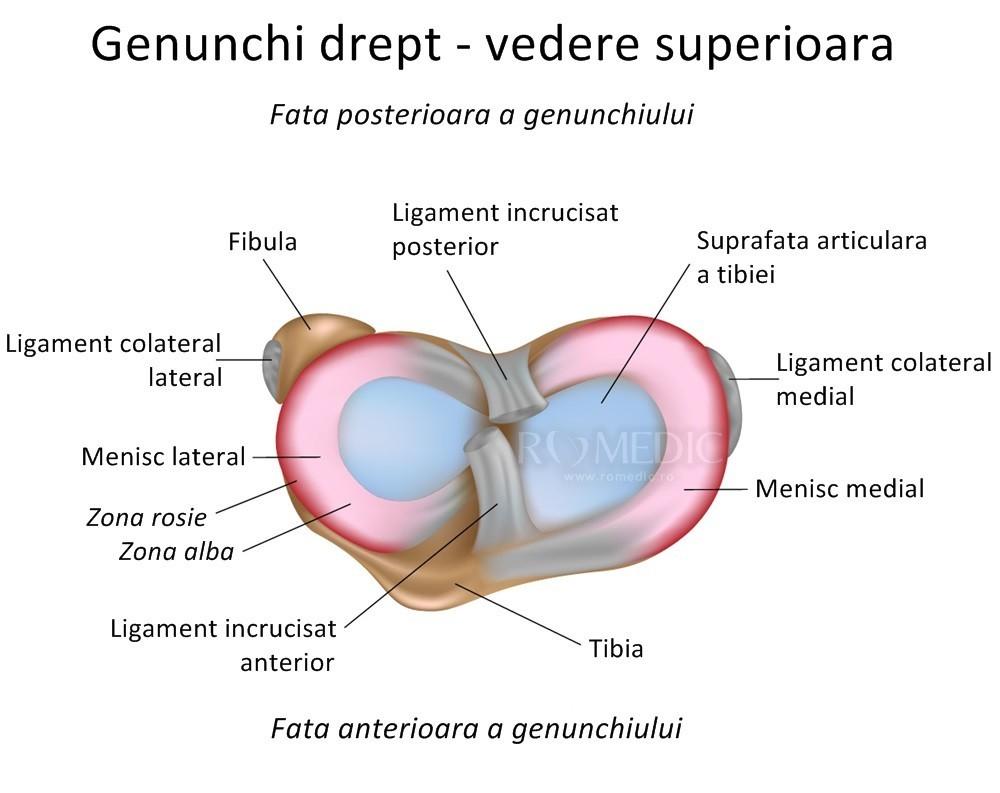articulații ale genunchiului osteoartroza tratamentului articulației șoldului stâng