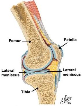 dureri de genunchi unguente articulare dureri la genunchi și fisuri ale articulațiilor