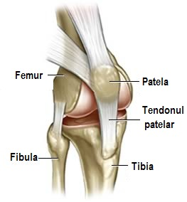 articulații ale genunchiului mușchii și articulațiile sunt foarte dureroase