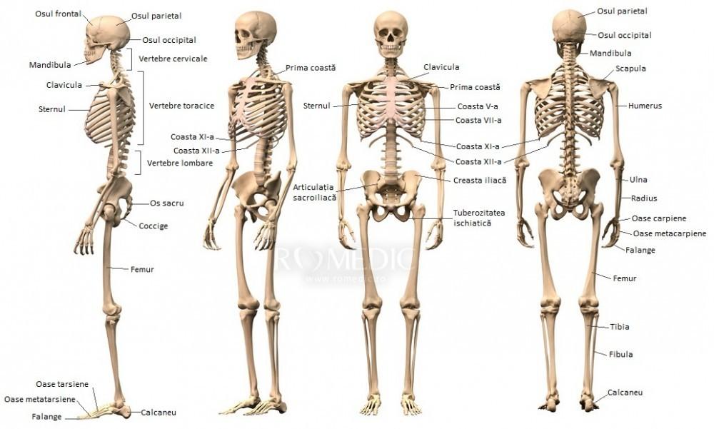 boli de cartilaj ale nasului remedii pentru durerea în spate și articulații