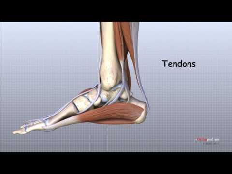 articulațiile rănesc piciorul umflat ce să faci preparate helev pentru osteochondroza