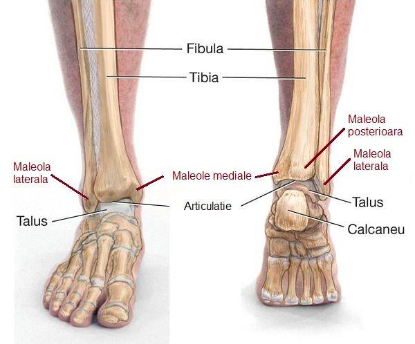 artroza articulației piciorului după fractură