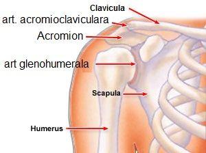 boli legate de vârstă în articulația umărului antibiotice pentru răcelile dureri articulare