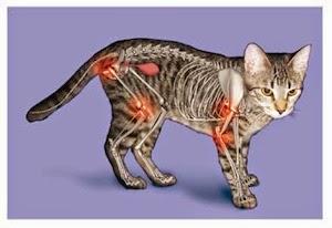 tratament de ruptură a articulației acromioclaviculare