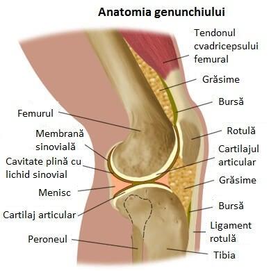 deteriorarea genunchiului drept recenzii de unguent pentru dureri de umăr