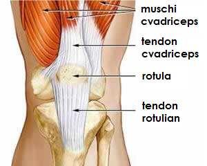 inflamația tendonului simptomelor genunchiului cum să elimini rapid inflamația articulației piciorului