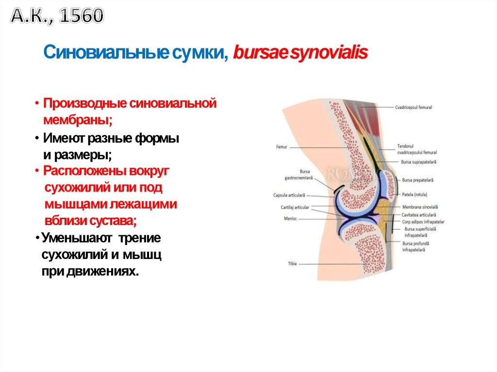 medicina articulară profundă articulațiile genunchilor și coatelor sunt foarte dureroase