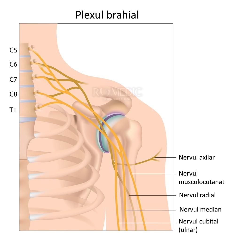 nervii articulari doare