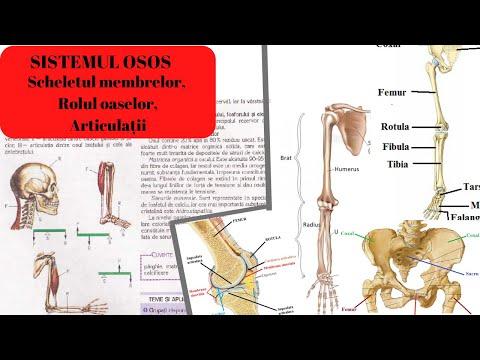 articulațiile se umflă roșu rănit durere în articulația sacrală