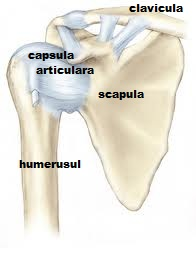 durere în articulația umărului după exercițiu dureri articulare în partea dreaptă a corpului