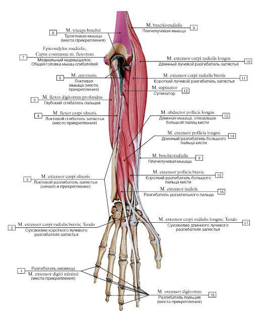 articulație dureroasă a genunchiului din exterior