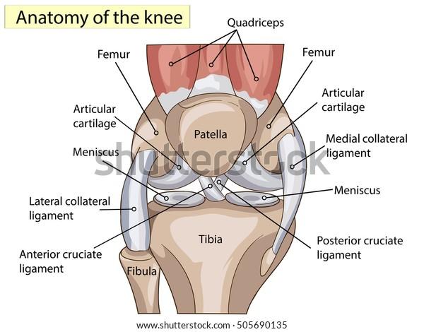 dureri de picior în articulația degetului mare