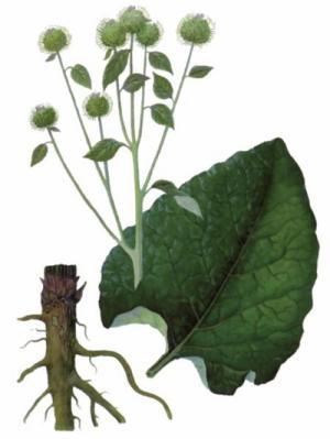 plante medicinale pentru îmbinări cu artroză